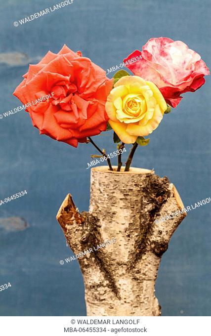 Still life, three roses in a trunk