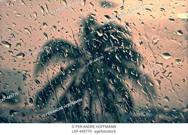 Palmtree through a window with raindrops, Manila, Luzon, Philippines, Asia