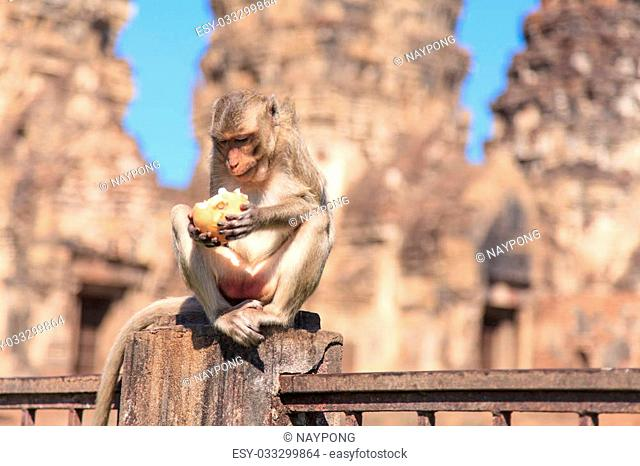Monkey in front of Prang Sam Yot in Lopburi, Thailand