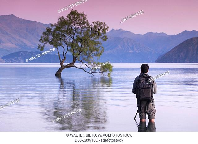New Zealand, South Island, Otago, Wanaka, Lake Wanaka, solitary tree and photographer