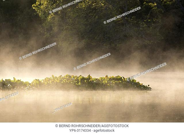 river and water plants with fog, Rio Claro, Pantanal, Mato Grosso, Brazil