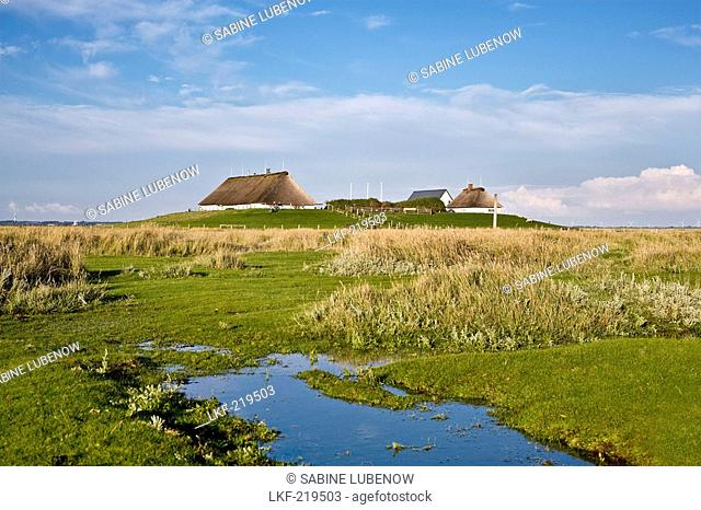 Hamburger Hallig, North Frisian Islands, Schleswig-Holstein, Germany