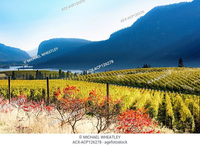 Blue Mountain Winery Vineyard, Okanagan Falls, British Columbia, Canada