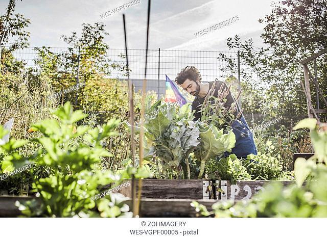 Man gardening in urban garden