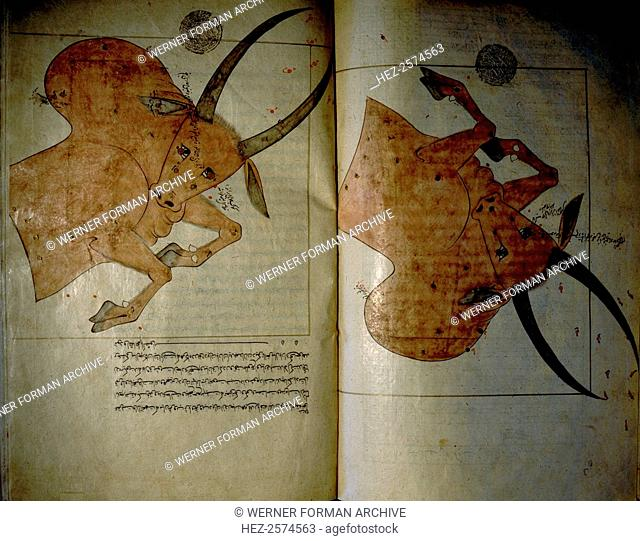 Illustration from a copy of 'The Book of Fixed Stars', written originally by the great Muslim astronomer Adb al-Rahman Umar al-Sufi