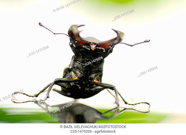 Bug a deer