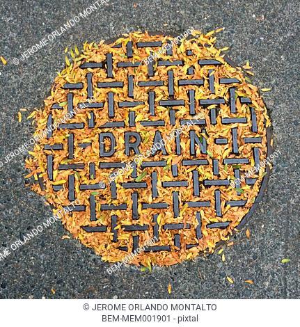 Fallen leaves in storm drain
