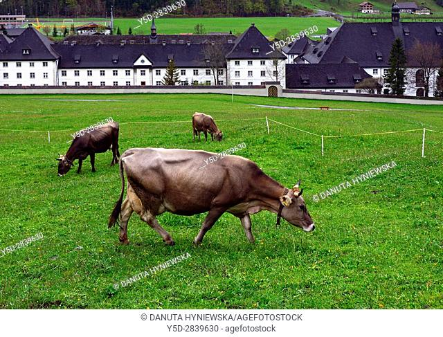 Swiss cows in foreground, Engelberg Benedictine Monastery in the background, Engelberg, Obwalden canton, cantral Switzerland