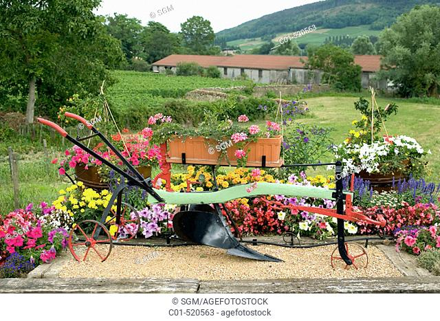 Flowerbed with an ancient plow. 'Buissières' village. Mâconnais, wine country. Burgundy. France