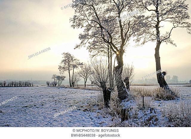 field scenery in winter, Germany, Lower Saxony, East Frisia
