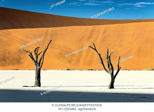 trees of Namibia, namib-naukluft national park, Namibia, africa