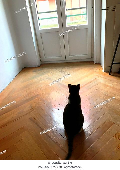 Cat looking at a closed window in an empty room