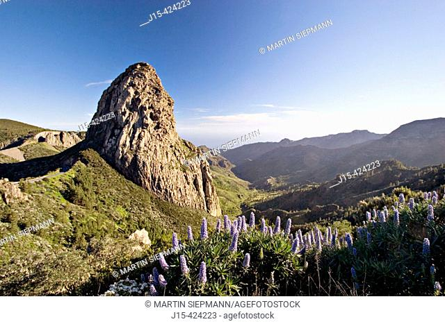 Roque de Agando in Garajonay National Park. Echium acanthocarpum. La Gomera. Canary Islands. Spain