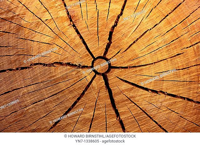 close up of the end of a sawn log showing cracks and growth rings
