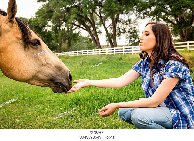 Young woman, crouching, petting horse
