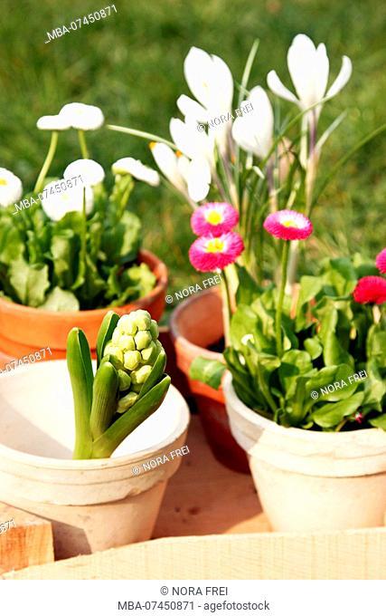 Garden, flowerpot, flowers, flower