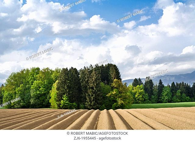 Scenic landscape with field planted with potatoes. Slovenian countryside