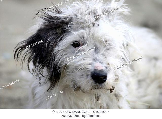 Portrait of a stray dog (Greece)