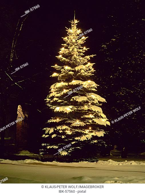 Illuminated christmas tree in the snow at night