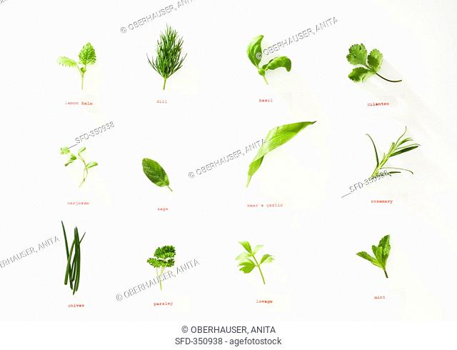Twelve different herbs with labels