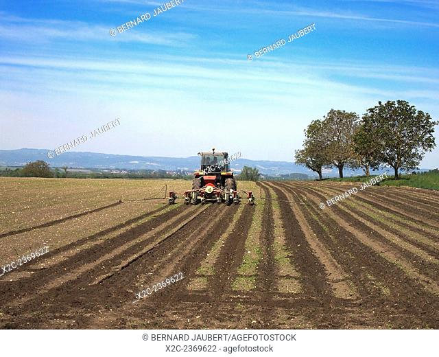 Tractor plowing a field in the Limagne Plain, near Maringues, Auvergne, France, Europe in Spring