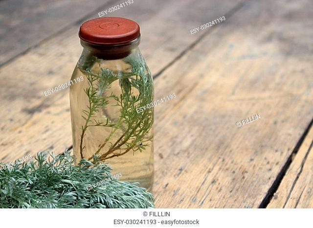 Sprig plant Shepherd's purse, Capsella bursa-pastoris, in a glass bottle. Tincture.Wormwood