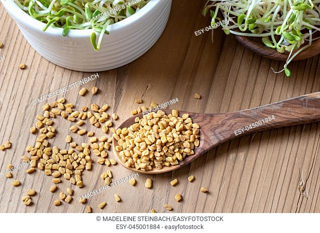 Dry fenugreek seeds on a spoon with five-day sprouts in the background