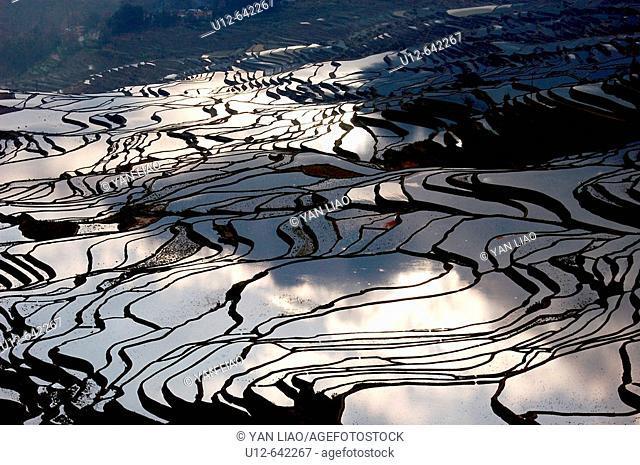 Rice paddy. Yunnan. Yuanyang. China