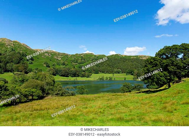Loughrigg Tarn Lake District Cumbria England situated north of Windermere and village of Skelwith Bridge on a beautiful summer day with blue sky