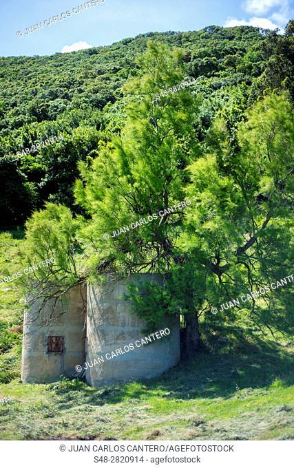 Entorno natural en Noja. Cantabria. España. Europa