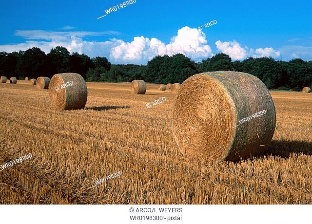 Bales, of, straw, on, stubble, field, North, Rhine-Westphalia, Germany