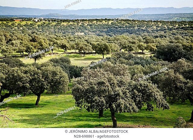 Valle de los Pedroches, Córdoba province, Spain