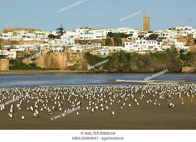 Morocco, Rabat, city view, Kasbah of the Oudaia, river Oued Bou Regreg, beach, seagulls, city, district, buildings, houses, tower, architecture, water, shore