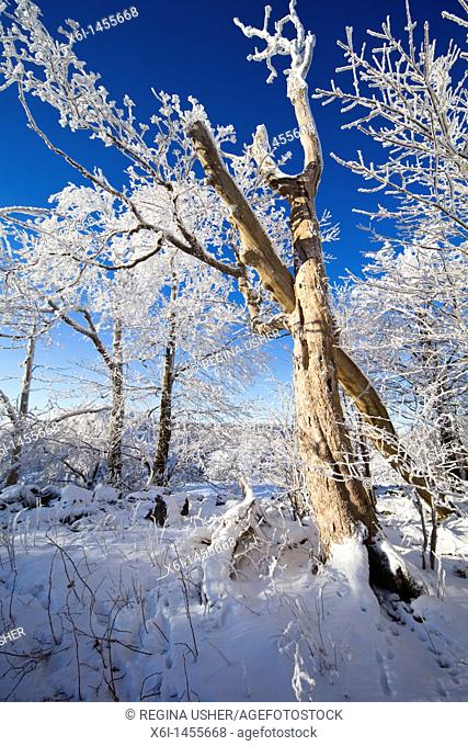 Snow and frost on trees in winter, Hoher Meissner National Park, north Hessen, Germany