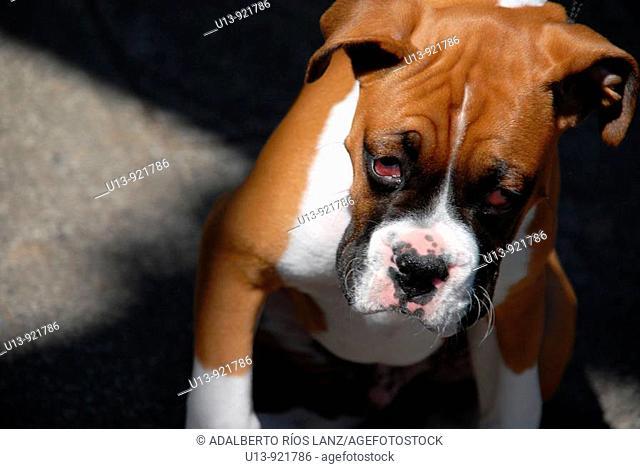 Dog, Portland, Oregon, United States