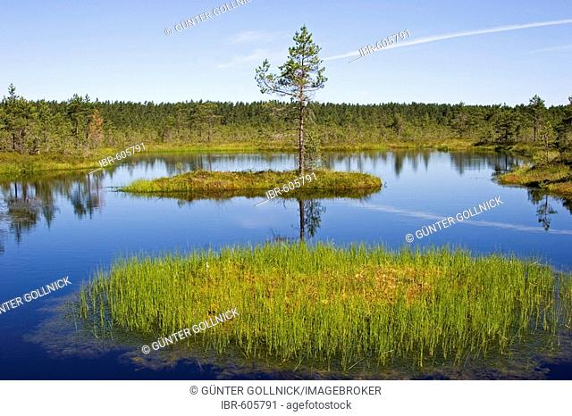 Viru Raba, marsh landscape in Lahemaa National Park, Estonia, Europe