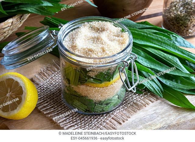 A jar filled with fresh ribwort plantain leaves, lemon and cane sugar, to prepare homemade herbal syrup against cough