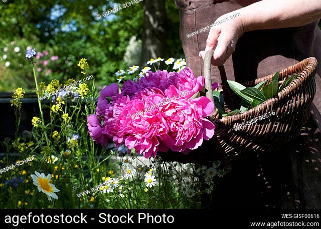 Hand of senior woman carrying basket with pink blooming roses
