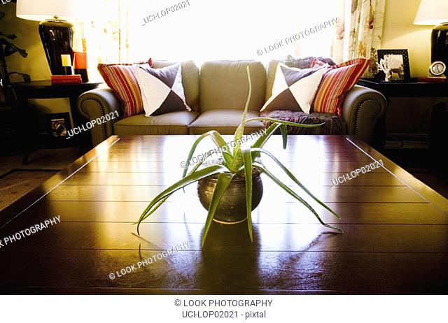 Potted plant on coffee table