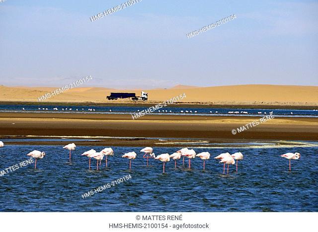 Namibia, Erongo region, Walvis Bay, Greater Flamingoes