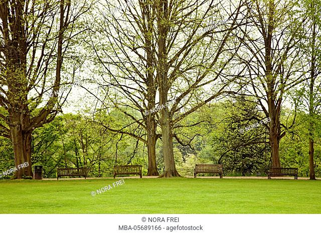 Great Britain, London, tree, park, garden, spring