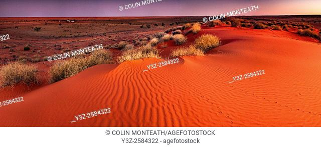 Tracks across sand dune at dusk, panorama, Old Andado Station, Simpson desert, Northern Territory, Central Australia