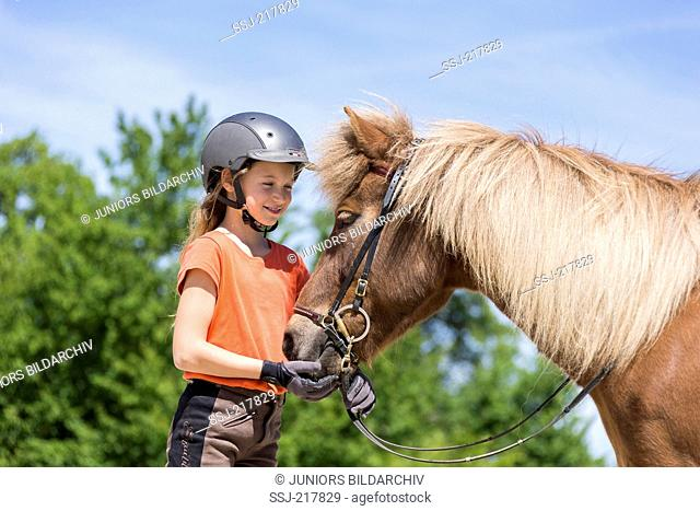 Icelandic Horse. Girl standing next to a chestnut horse with bridle. Austria