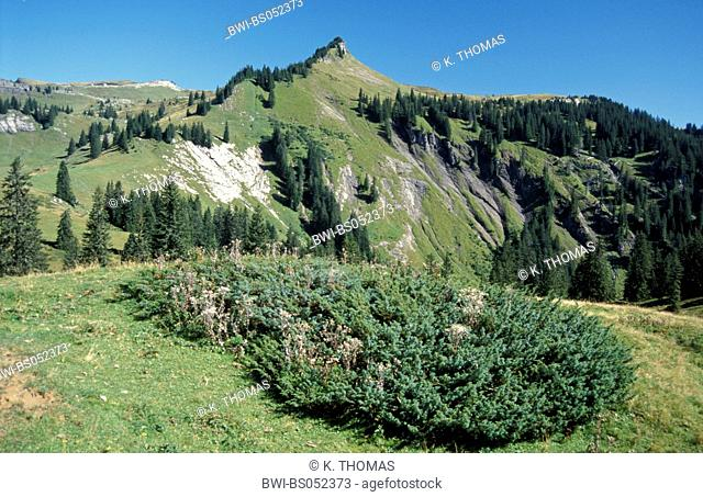 moutain Matonna, Austria, Vorarlberg, Alpin, mountain Hoher Freschen