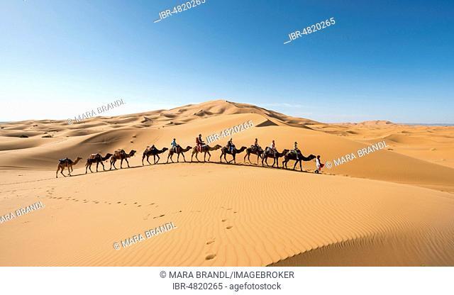 Caravan with dromedaries (Camelus dromedarius), sand dunes in the desert, Erg Chebbi, Merzouga, Sahara, Morocco