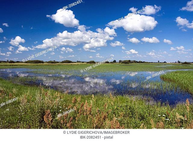 Kucharow Grad wetlands, Biebrzanski National Park, Poland, Europe