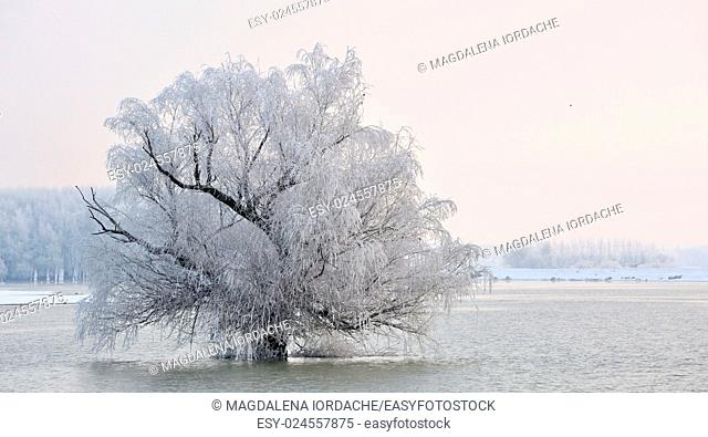 Frosty winter tree on Danube river
