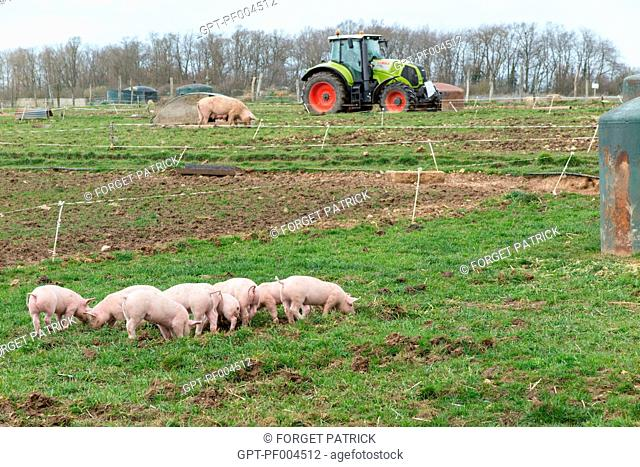FREE-RANGE PIG FARM, LOUVIER FARM, PROCESSING AND SALE AT THE FARM, BALINES, VERNEUIL-SUR-AVRE (27), FRANCE
