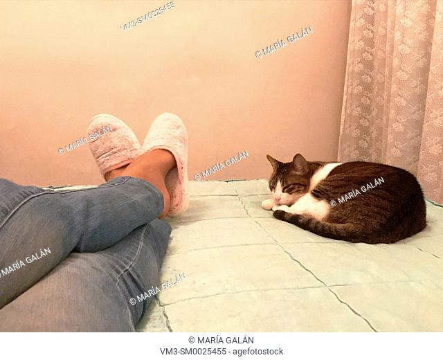 Woman's legs and cat lying on bed