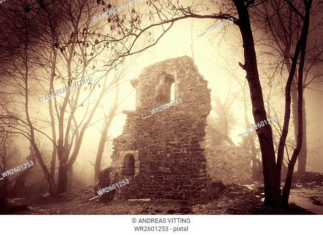 Abbey ruin, dense fog, Petersberg, Saalekreis district, Saxony Anhalt, Germany